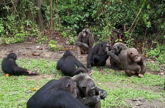Image result for afi mountain wildlife sanctuary