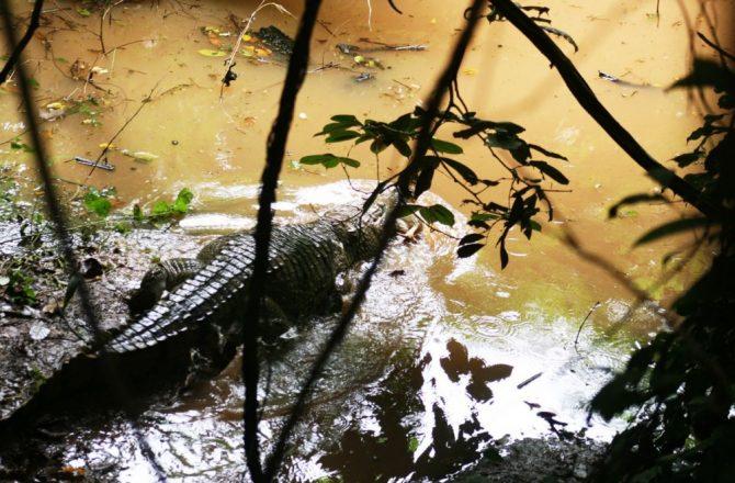Ani Ozalla Lake | Visit Nigeria Now